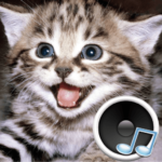 Animal sounds. Learn about animals and play.  3.7.2 MOD (Unlock all Animals)