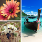 Photo Collage Editor 2.2.50  MOD (Monthly)