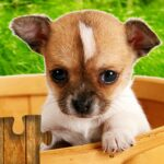 Dogs Jigsaw Puzzles Game   MOD (Unlimited Money) 28.3