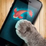 Fish game toy for cats  MOD (Remove ads) 1.31